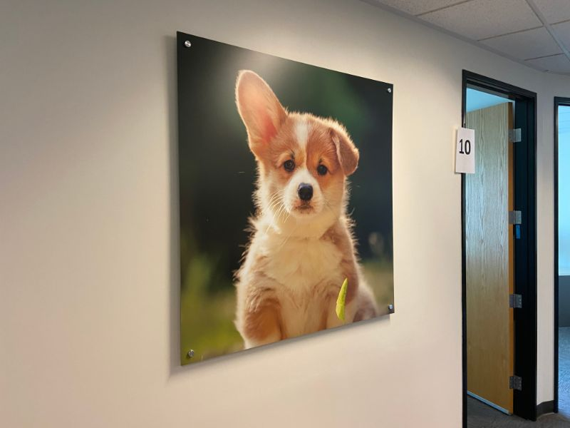 Office Wall Art Decorates at Corporate Headquarters for NVA in Los Angeles