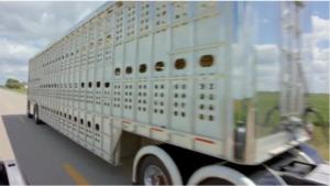 livestock semi trailer for sale in the usa