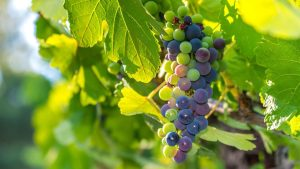 verasion in wine country
