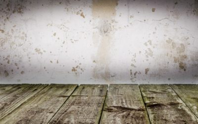 Las Vegas, NV – Want to Remove Mold from Wooden Surface? Mold Remediation Tips